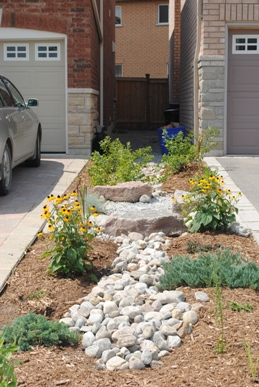 Downspouts into rain garden