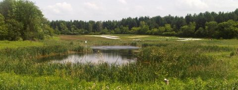 Wetland Water Balance Modelling Guidance and its Implementation in a Computer Modelling @ Online webinar
